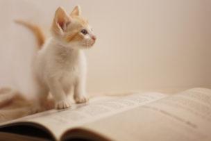 読むということ 言葉の区切り方、抑揚